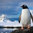 Penguin on the rocks — Stock Photo #4199794