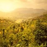 Beautiful Asian landscape — Stock Photo #44328939