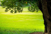 Green city park with trees. — Stock Photo