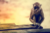 Portrait of the sad monkey. — Stock Photo