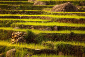 Beautiful Asian landscape — Stock Photo
