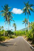 Estrada de asfalto bom com palmeiras — Fotografia Stock