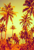 Nice tropical background  — Stock Photo