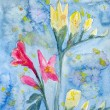 Stock Photo: Freesia