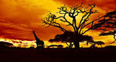 African night — Foto Stock