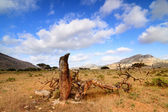 Socotra island — Stock Photo
