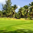Golf field -  