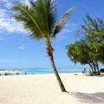 Tropical paradise — Stock Photo #25009639
