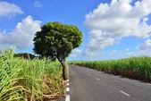 Mauritius island — Stock Photo