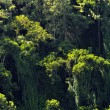 Stock Photo: Rainforest