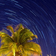 Tropical night — Foto de Stock