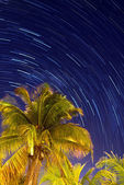 Tropical night — Stock Photo