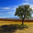 Anatolia landscape — Stock Photo