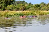 Victoria Nile coastline — Stock Photo