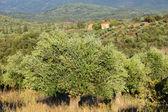 Greece, rural landscape — Stock Photo