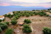 Greek landscape — Stock Photo