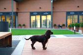 A waiting dog — Foto Stock