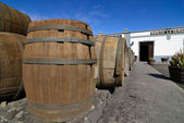 Barrels for wine — Stock Photo