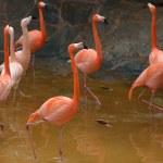 Flamingo — Stock Photo #43019953