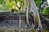 Ta Prohm temple in Angkor Wat — Stock Photo