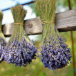 Lavender flowers — Stock Photo #50471485
