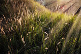 Grass under the sunbeams — Foto de Stock