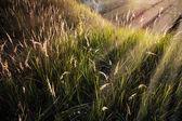 Grass under the sunbeams — Stock Photo