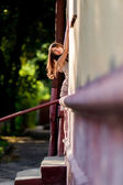 Pretty woman in the doorway of a house — Stock Photo