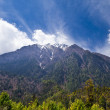 Pine forest in Annapurna trek — Stock Photo