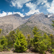 Pine forest in Annapurna trek — Stock Photo #18329529