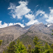 Pine forest in Annapurna trek — Stock Photo #18329781
