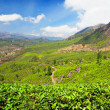 Green terraces — Stockfoto
