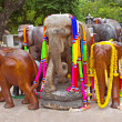 Decorated elephants — Foto Stock
