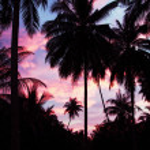 Palms and sky — Stock Photo