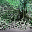 Tree roots — Lizenzfreies Foto
