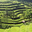 Beauty rice terrace — Stock Photo