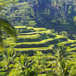 Beauty rice terrace — Stock Photo #20253573