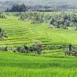 Beautiful rice terraces — Lizenzfreies Foto