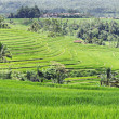 Beautiful rice terraces — Foto de Stock