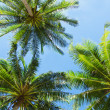 Three palms — Stock Photo #20253829