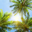 Royalty-Free Stock Photo: Three palms