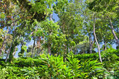 Deep tropical forest — Stock Photo