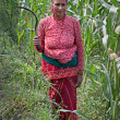Nepalese farmer — Stock Photo