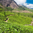 Tea plantation in Munnar — Stock Photo #31303377