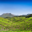 Tea plantation in Munnar — Stock Photo #31303773