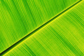 Fresh banana leaf  — Stock Photo