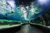Underwater tunnel — Stock Photo