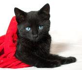 黑色的小猫。1.5 个月的年龄 — 图库照片