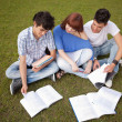 Friends are studying - Stock Photo