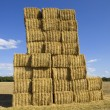 Dry hay - Stock Photo